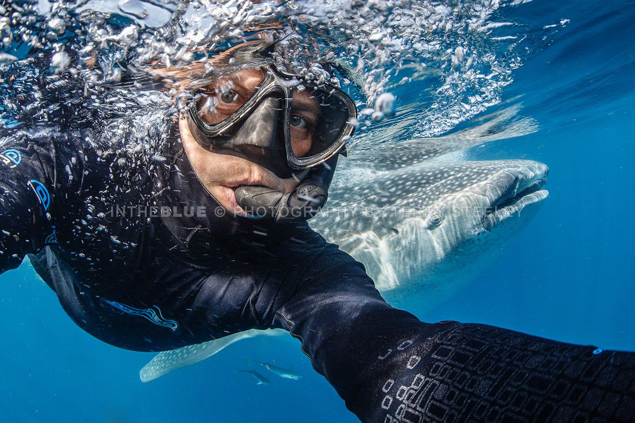 Whale shark #selfie